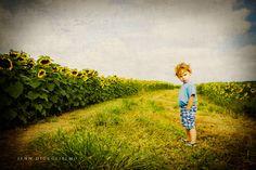#sunflower field