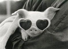little miss piggy!