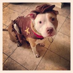 Sheriff dog costume for frank the tank! Check out target.com #pitbull