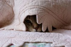 Notecard  Tabby cat hiding under a quilt by DabHands on Etsy, $3.25