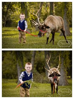 Reindeer Christmas photos!  #reindeer #christmasphotos #photographyinspiration #charadephotography