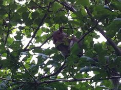 Squirrel eating a nut on a tree branch. What features make it adapted to living in woods?