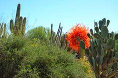 Chihuly Art in the Desert Garden