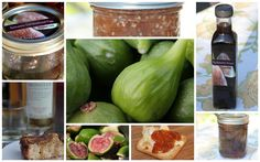Lots of recipes for using up fresh figs! They are so great when in season, but the only last for a short while.