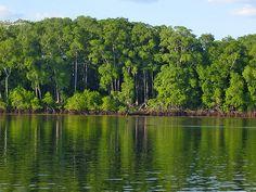 manglares bahia el espino ,Jucuaran ,Usulutan El Salvador.