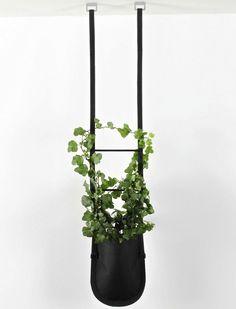 Hanging urban garden plant