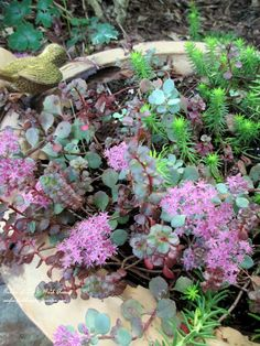 Fall Succulents in a rusted birdbath    http://ourfairfieldhomeandgarden.com/our-fairfield-home-garden-welcomes-fall/