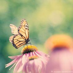 Flutterby!