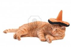 8376677-cat-is-lying-on-the-floor-with-sombrero-on-its-head.jpg 400×267 pixels