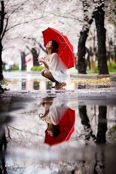 Sakura in the Rain  red umbrella