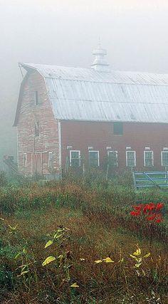 Barn, Fog, & Flowers