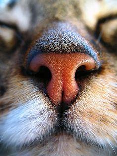 The Pet Blog: The cat nose