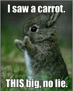Funny Bunny ok not funny bunny but this is so funny................   to me