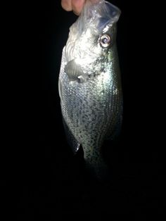 awsom, bigger, fish, outdoor