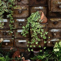plant, garden office, filing cabinets, vine, old cards, librari, card catalog, drawer, garden pots