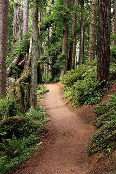Arcata Redwood Park