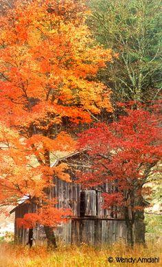 fall leaves, autumn scenes, season, autumn leaves, autumn barn, colors, fall trees, country barns, old barns