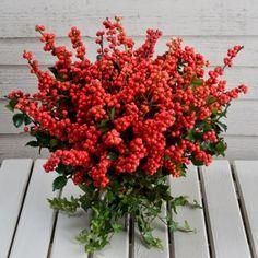 bouquetsjust bouquet, interest bouquet, bell bouquet, red berri, christma berri