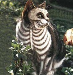 Skeleton Cat.  I miss Halloween.