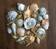 Edible Chocolate Filled Candy Sea Shells / by andiespecialtysweets