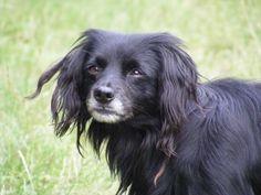 friend nice, furri friend, dogs, companion pet, femal dog, doggi, dog shampoo, skunk smell out of dog, furry friends