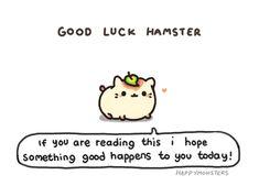 Good luck hamster!