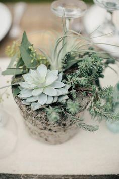 Succulents & pottery