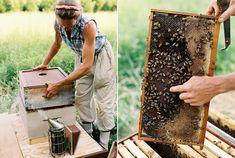 bee hive--karen wise bees, life, dream, beekeeping, garden, homestead, bee hive, bee keeper, honey bee