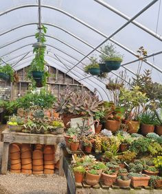 What a greenhouse!