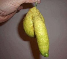Rude lemon!