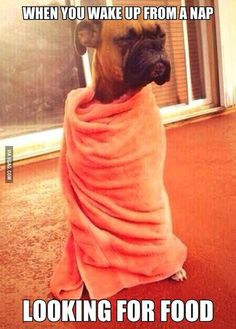 When you wake up from a nap looking for food...