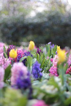 #secretgarden #garden