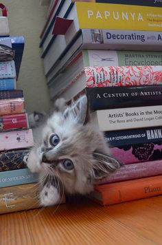Best things in life. Books + cats!