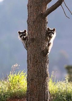 I love coon hunting but this is a cute picture.