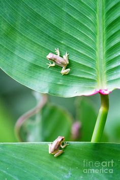 Baby Frogs Photograph  - Baby Frogs Fine Art Print