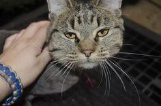 3 Ways to Litter Train a Kitten - wikiHow