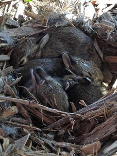 Just 4 baby bunnies I found at the park