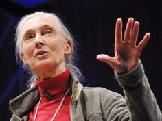Jane Goodall: What separates us from chimpanzees? via TED
