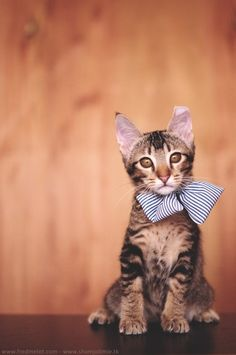 Kitty with a bow