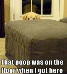that poop was there when i got here
