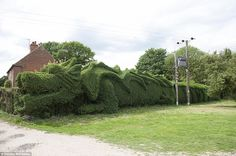 Mr Brooker spent 10 years trimming his hedge into the shape of a dragon!