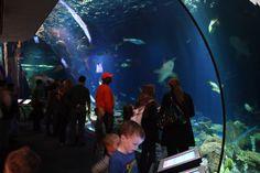Shedd Aquarium Chicago Jan 2010