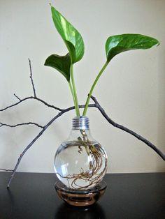 Repurposed Lightbulb : ETSY - eGardenStudio  Eco friendly table top gardens  gift ideas