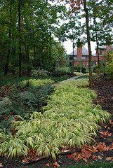 shade garden, Japanese forest grass