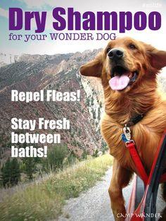 Easy Dry Shampoo for Dogs ~ Fresh & Flea Free!