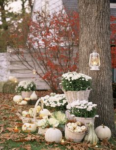 Switch your typical orange pumpkins for white pumpkins this October. They are oh so chic!