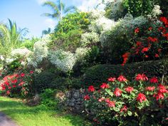 Winter flowers on the Big Island of Hawaii