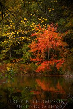 Autumn foliage, Walden Pond State Reservation, Concord, Massachusetts | Troy B. Thompson Photography