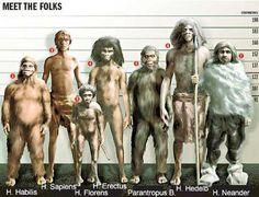 From left to right: Homo habilis, Homo Sapiens, Homo floresiensis, Homo Erectus, Paranthropus boisei, Homo heidelbergensis and Homo neanderthalensis