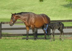 Karen shares a photo of her mare, Cassie, and Cassie's foal, Tony.